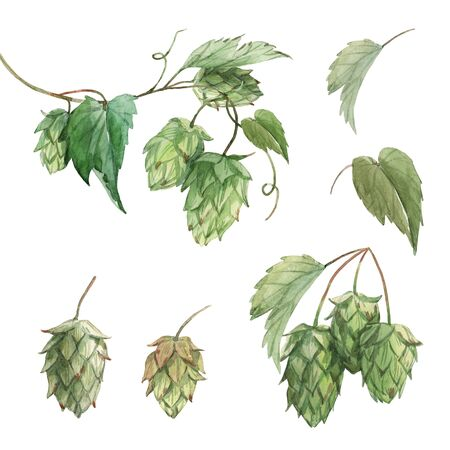 Watercolor hop flowers illustration set Standard-Bild - 130948233