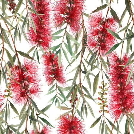 Watercolor australian callistemon seamless pattern