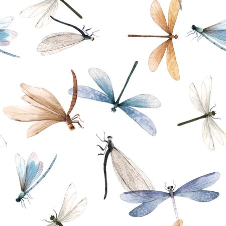 Reticolo senza giunte variopinto dell'insetto della libellula di estate di vettore dell'acquerello