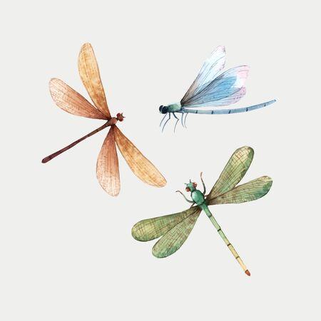 Insieme delle illustrazioni variopinte dell'insetto della libellula di estate di vettore dell'acquerello Vettoriali