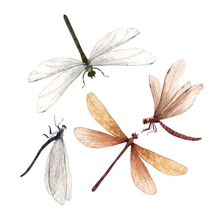 Watercolor summer dragonfly insect colourful illustrations set