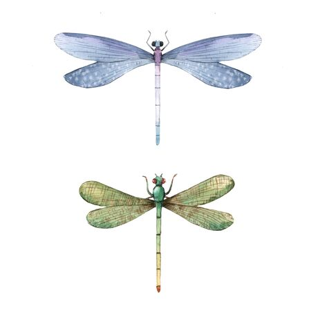 Watercolor summer dragonfly insect colorful illustrations set