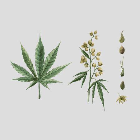 Beautiful vector watercolor medical marijuana illustration. Natural therapeutic drug.