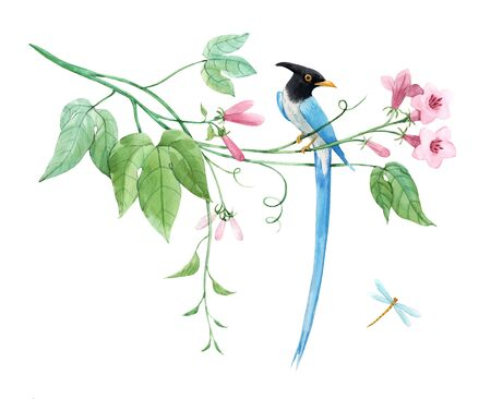 Watercolor birds of paradise on branch with tropical gentle pink flowers. White isolated background. Stock illustration