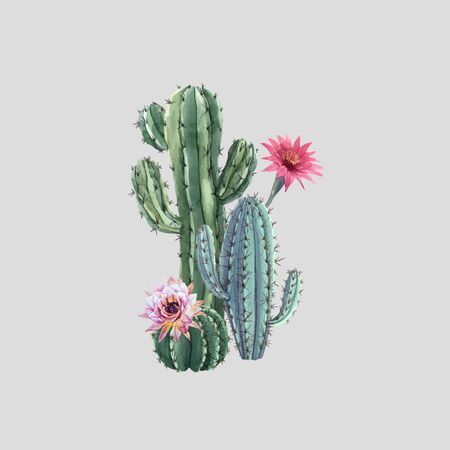Beautiful watercolor cactus vector combination. Hand drawn stock illustrations. White background. Isolated objects. Desert plants.