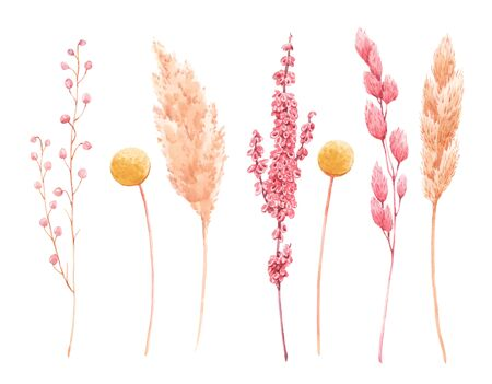 Beautiful bouquet composition with watercolor herbarium wild dried grass in pink and yellow colors.
