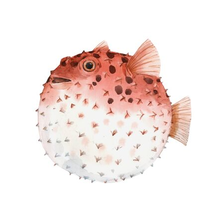 Beautiful artwork with very cute watercolor hedgehog fish. Stock illustration. Sea life.