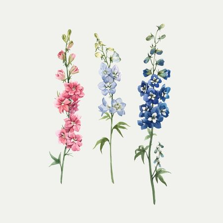 Beautiful vector hand drawn watercolor floral set with pink, white and blue delphinium flowers. Stock illustration. Vector Illustration