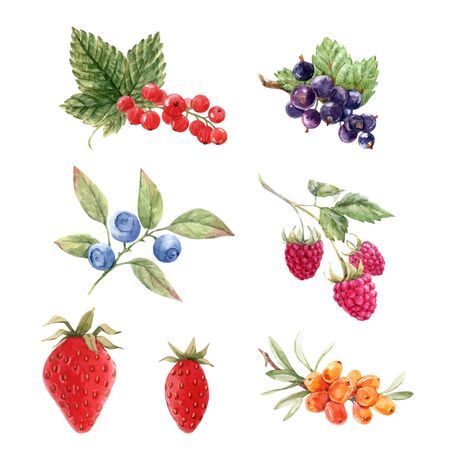 Beautiful vector set with watercolor hand drawn berry paintings. Stock illustration.