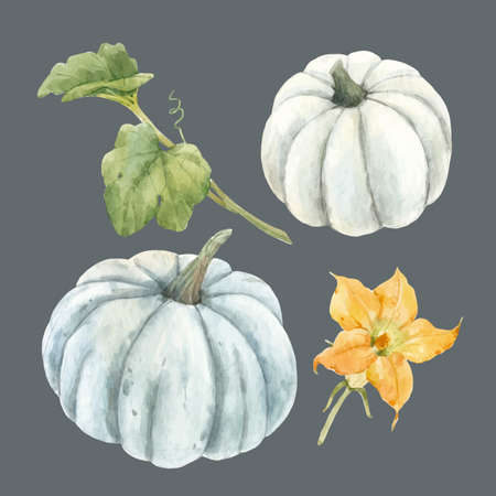 Beautiful vector stock illustration with watercolor pumpkin vegetable.