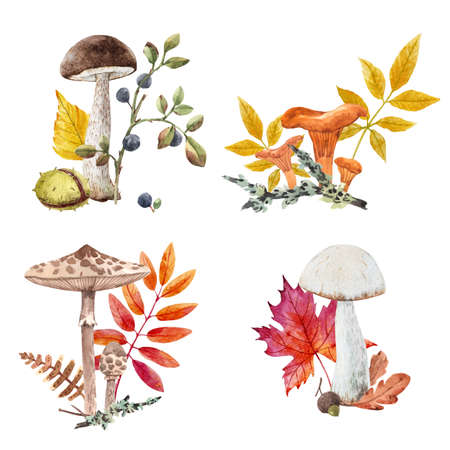 Beautiful autumn set with watercolor hand drawn mushrooms with colorful leaves. Stock illustration. Stock Photo