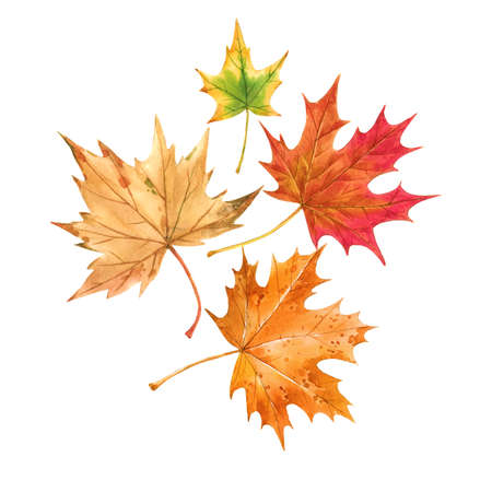 Beautiful autumn set with watercolor hand drawn colorful maple leaves. Stock illustration. Stock Photo