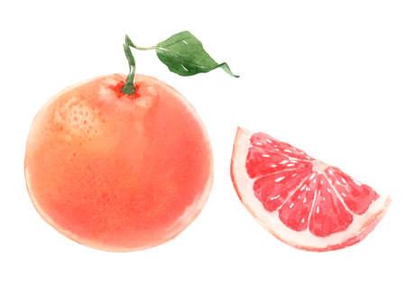 Beautiful set with watercolor hand drawn grapefruit fruit. Stock illustration. Stock Photo