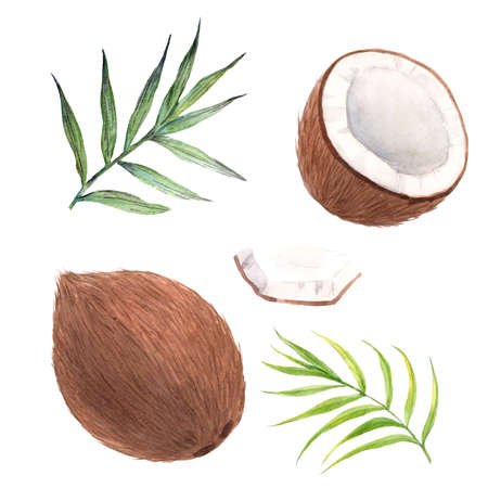 Beautiful set with watercolor hand drawn coconut fruit. Stock illustration.
