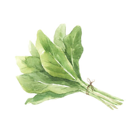 Beautiful set with watercolor hand drawn salad leaves. Stock illustration.