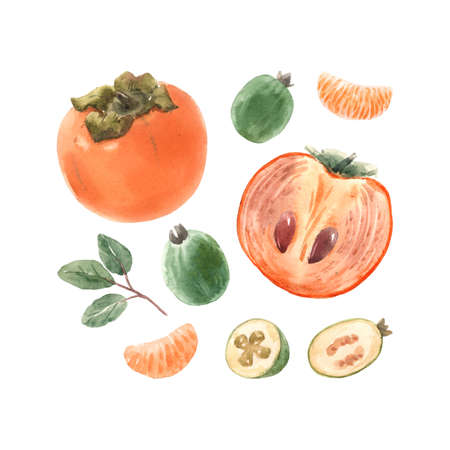 Beautiful set with watercolor hand drawn persimmon and feijoa fruit. Stock illustration. Stock Photo