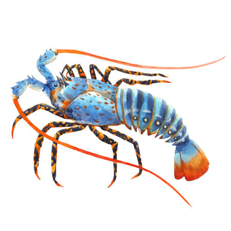 Beautiful image with watercolor hand drawn rainbow lobster. Stock illustration.