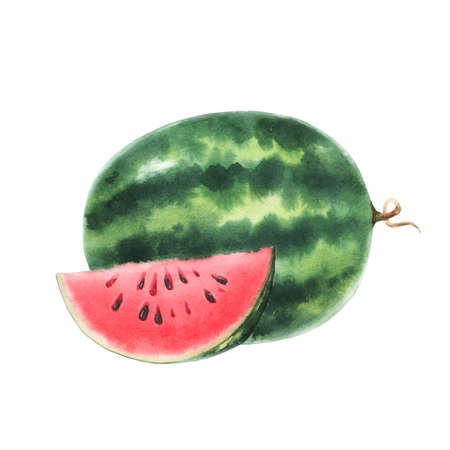Beautiful stock illustration with watercolor hand drawn watermelon fruit.