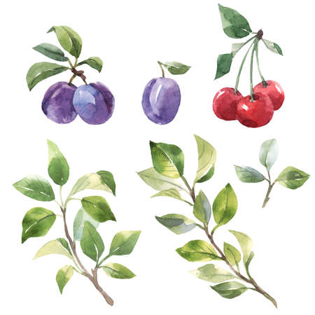 Beautiful set with hand drawn watercolor tasty summer plum and cherry fruits. Stock illustration.