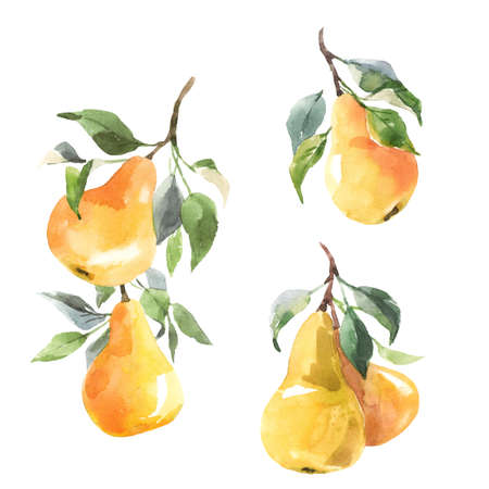 Beautiful set with hand drawn watercolor tasty summer pear fruits. Stock illustration.