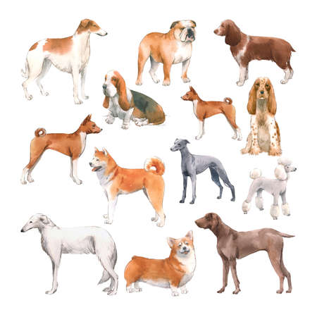 Beautiful set with cute watercolor hand drawn dog breeds Cocker spaniel Greyhound Hound Basenji and Russian Greyhound Whippet . Stock illustration. Foto de archivo