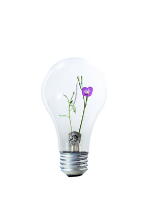 flower bulb: Light Bulb And Flower Stock Photo