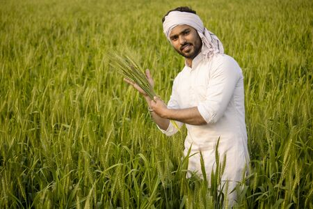 Indian farmer showing his healthy wheat crop at vegetative stage Stock Photo