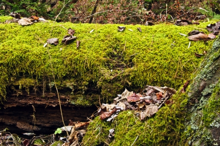 fallen: moss covered tree Stock Photo