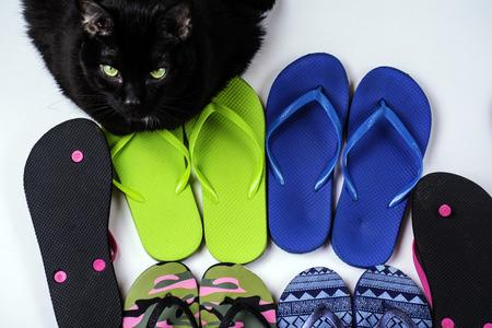 sandalias: flip flops de una variedad de colores vigilado por gato de nuevo Foto de archivo