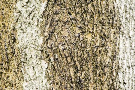 aislado ceniza corteza de tronco de árbol