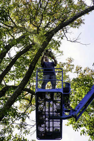 heights job: man on aerial platform cutting tree with chainsaw