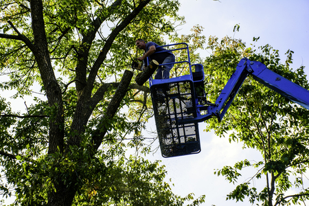 heights job: man on aerial platform trimming tree with  chainsaw Stock Photo