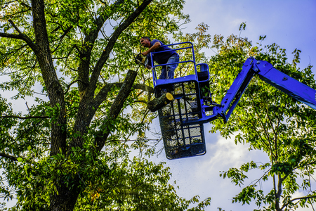 tree trimming: man on aerial lift trimming tree with chainsaw