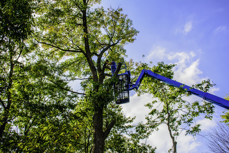 heights job: man on aerial lift cutting tree with chainsaw Stock Photo