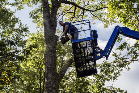 man on aerial lift cutting tree with chainsaw Stock fotó