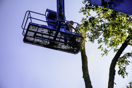 man on aerial lift cutting tree with chainsaw Stock Photo