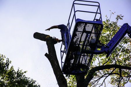 man cutting tree with chainsaw