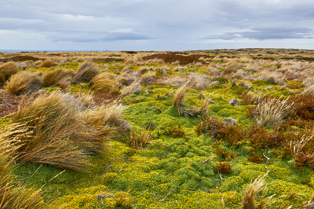 patagonian chile: Blooming Patagonian steppe immediately after the rain near the town of Punta Arenas, Chile