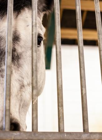 dapple horse: horse