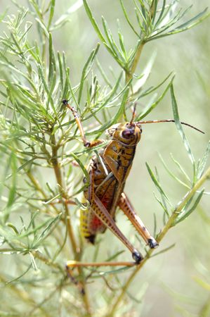 knospe: grasshopper in a tree at the park Stock Photo