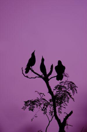 three ravens in a tree in the dark night