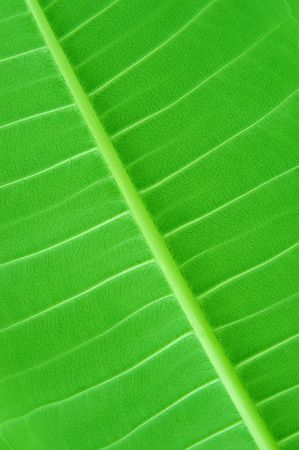 vivid green leaf close up background texture Stock Photo