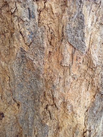materiale: Texture legno