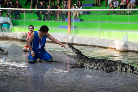 exciting: Chon Buri THAILAND  January 1 2015: crocodile show at crocodile farm. This exciting show is very famous among among tourist and Thai people