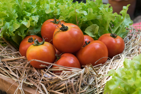 wooden crate: fresh tomatoes and Hydroponic vegetables in a wooden crate