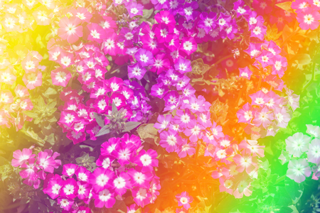 Beautiful multicolored flowers background Stock Photo