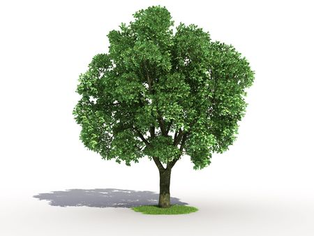 lone tree: 3d rendering of an isolated elm tree