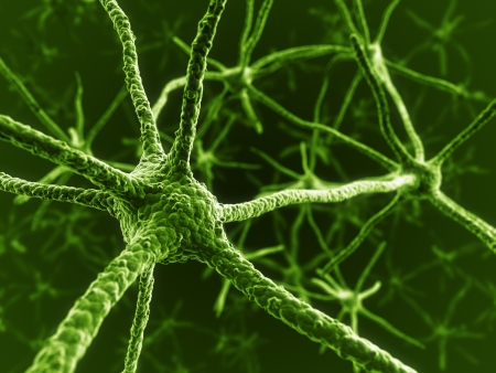 3d rendering of neurons
