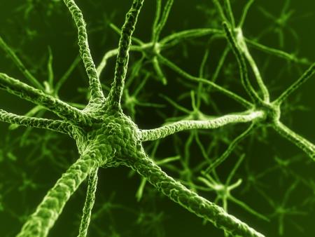 cellule nervose: Rendering 3D di neuroni Archivio Fotografico