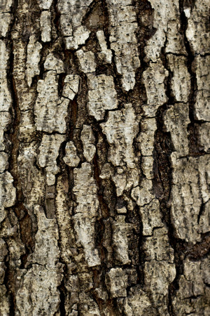 Wood texture grunge background